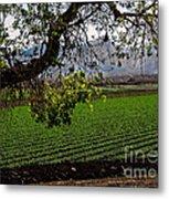 Panoramic Of Winter Lettuce Metal Print by Robert Bales
