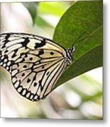 Paper Kite On A Leaf Metal Print