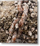 Periwinkle Protection  Metal Print by Eugene Bergeron