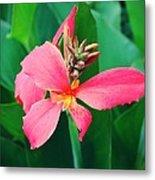 Pink Bloom Metal Print by Cathie Tyler
