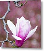 Pink Magnolia Flower Metal Print