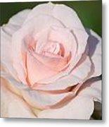 Pink Promise Metal Print by Nancy Edwards