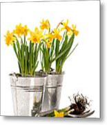 Planting Bulbs Metal Print