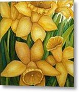 Playful Daffodils Metal Print by Vikki Wicks