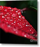 Poinsettia Leaf With Water Droplets Metal Print