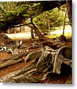 Point Lobos Whalers Cove Whale Bones Metal Print by Barbara Snyder