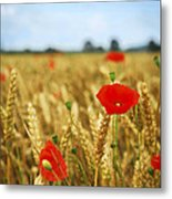 Poppies In Grain Field Metal Print by Elena Elisseeva