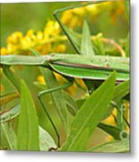 Praying Mantis In September Metal Print by Anna Lisa Yoder
