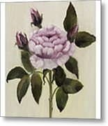 Princess Rose Metal Print by Nancy Edwards