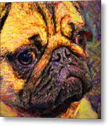 Pug 20130126v1 Metal Print by Wingsdomain Art and Photography