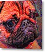 Pug 20130126v2 Metal Print