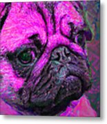Pug 20130126v3 Metal Print by Wingsdomain Art and Photography