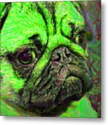 Pug 20130126v4 Metal Print by Wingsdomain Art and Photography