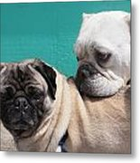 Pug Love Metal Print by DerekTXFactor Creative