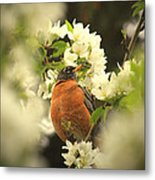 Red Breasted Beauty Metal Print by Laura Bentley