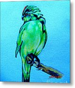 Red Crowned Parakeet Metal Print by Patricia Howitt