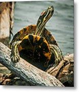 Red Eared Slider Turtle Metal Print