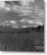 River Of Grass Metal Print by Andres LaBrada