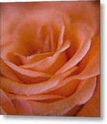 Rose Petals Metal Print by Kim Lagerhem