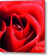 Rose Red Metal Print by Darren Fisher