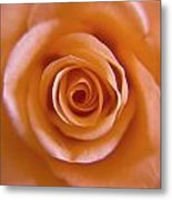 Rose Spiral 2 Metal Print by Kim Lagerhem