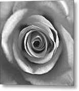Rose Spiral 4 Metal Print by Kim Lagerhem