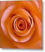 Rose Spiral Metal Print by Kim Lagerhem