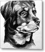 Rottweiler Devotion Metal Print by Patricia Howitt