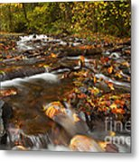 Scattered Leaves Metal Print by Mike  Dawson