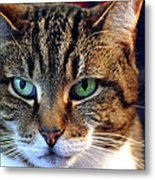 Seriously Now Where's My Food Metal Print by Mike Flynn