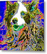 Sheep Dog 20130125v3 Metal Print by Wingsdomain Art and Photography