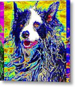 Sheep Dog Three 20130125 Metal Print by Wingsdomain Art and Photography