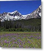 Showy Penstemon Wildflowers Sawtooth Mountains Metal Print