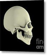 Side View Of Human Skull Metal Print by Stocktrek Images