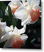 Signs Of Spring Metal Print
