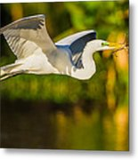 Snowy Egret Flying With A Branch Metal Print by Andres Leon