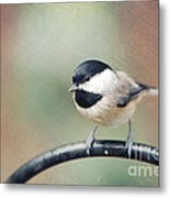 Solo Flight Metal Print by Kay Pickens