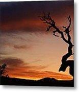 Southwest Tree Sunset Metal Print by Michael J Bauer