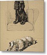 Spaniel And Sealyham, 1930 Metal Print