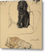 Spaniels, 1930, Illustrations Metal Print by Cecil Charles Windsor Aldin
