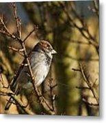 Sparrow Metal Print by Rebecca Cozart