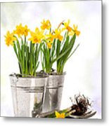 Spring Daffodils Metal Print by Amanda Elwell