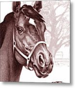 Stare Of The Stallion Metal Print by Patricia Howitt