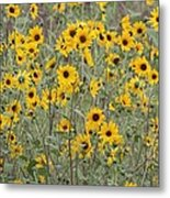 Sunflower Patch On The Hill Metal Print by Tom Janca