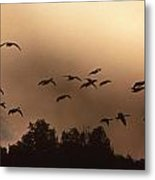 Sunrise Fog And Incoming Metal Print by Skip Willits