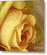 Sunshine Delight Yellow Rose Metal Print