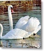 Swans Metal Print by Gary Heller