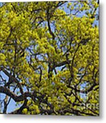 Tangled In Time Metal Print
