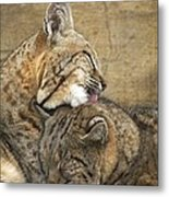 Tender Loving Care Metal Print by Teresa Schomig