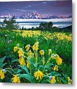Teton Spring Wildflowers Metal Print by Jerry Patterson